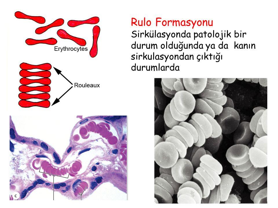Rulo Formasyonu Sirkülasyonda patolojik bir durum olduğunda ya da kanın sirkulasyondan çıktığı durumlarda.