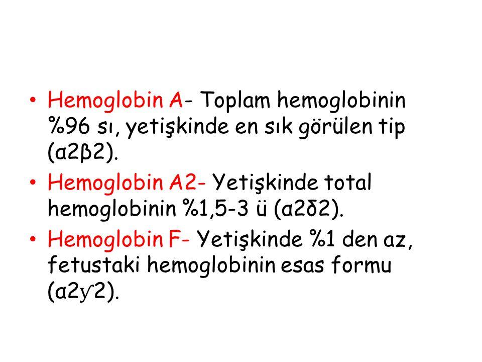 Hemoglobin A- Toplam hemoglobinin %96 sı, yetişkinde en sık görülen tip (α2β2).