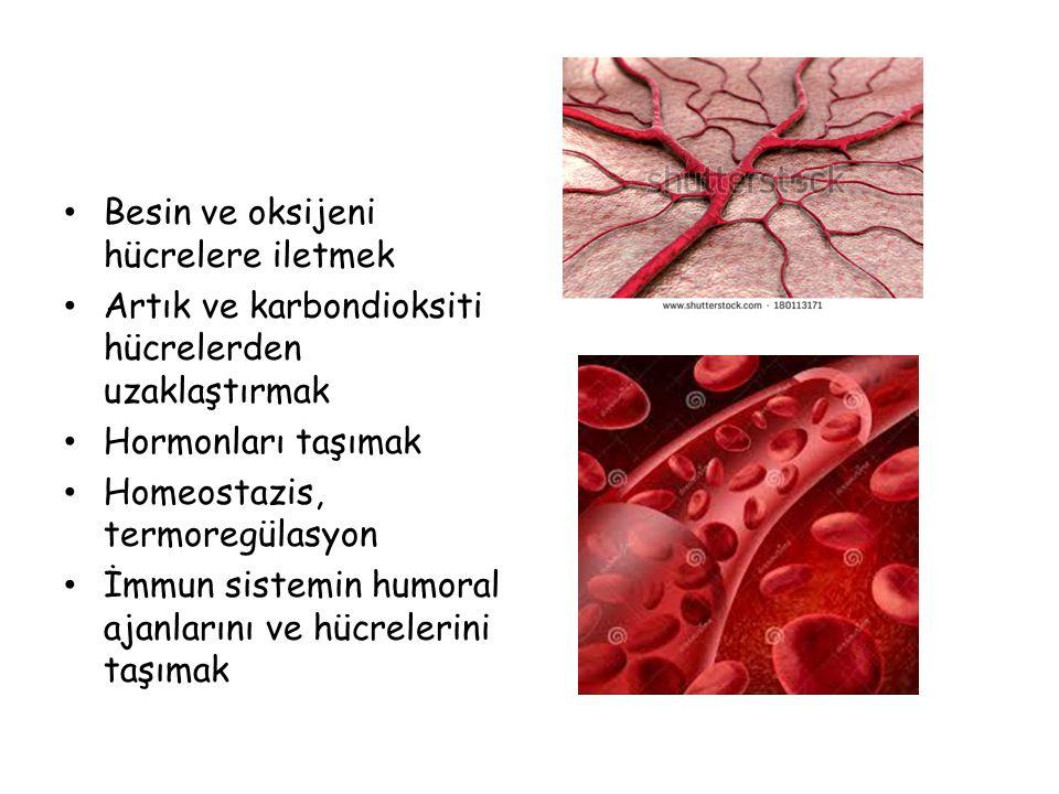 Besin ve oksijeni hücrelere iletmek