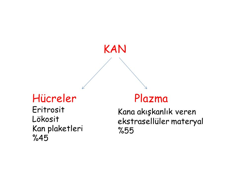KAN Hücreler Plazma Eritrosit Lökosit