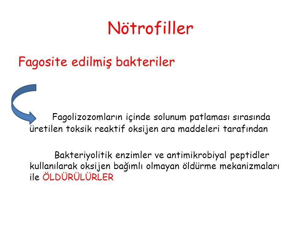 Nötrofiller Fagosite edilmiş bakteriler
