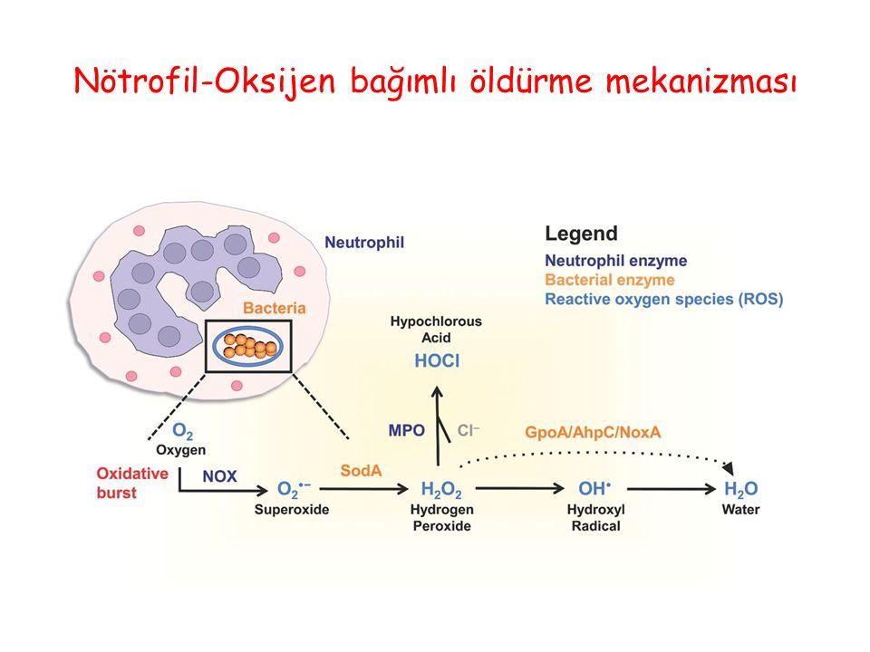 Nötrofil-Oksijen bağımlı öldürme mekanizması