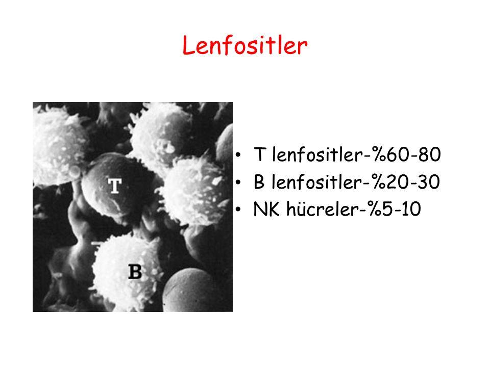 Lenfositler T lenfositler-%60-80 B lenfositler-%20-30