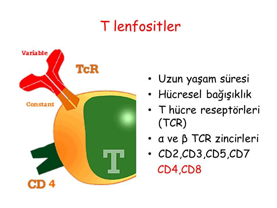 T lenfositler Uzun yaşam süresi Hücresel bağışıklık
