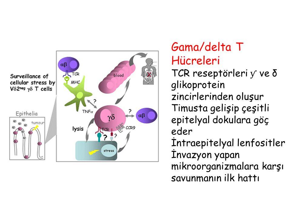 Gama/delta T Hücreleri