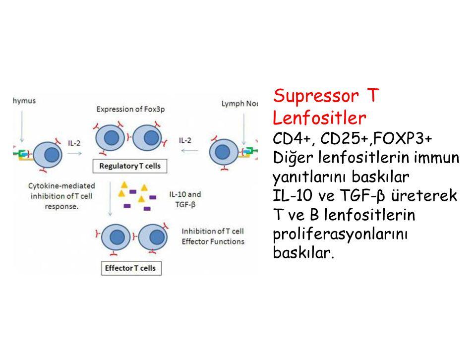 Supressor T Lenfositler