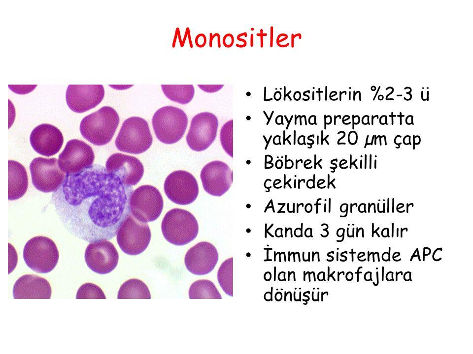 Monositler Lökositlerin %2-3 ü Yayma preparatta yaklaşık 20 µm çap