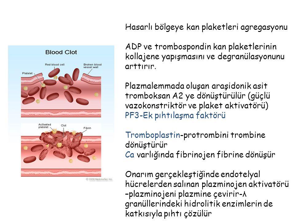 Hasarlı bölgeye kan plaketleri agregasyonu