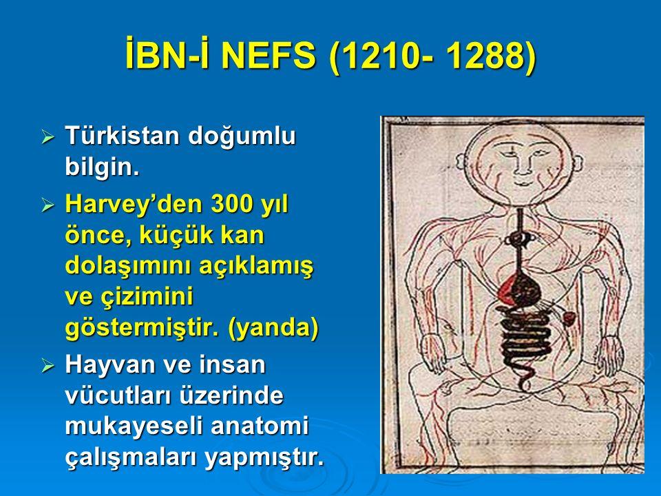 İBN-İ NEFS (1210- 1288) Türkistan doğumlu bilgin.