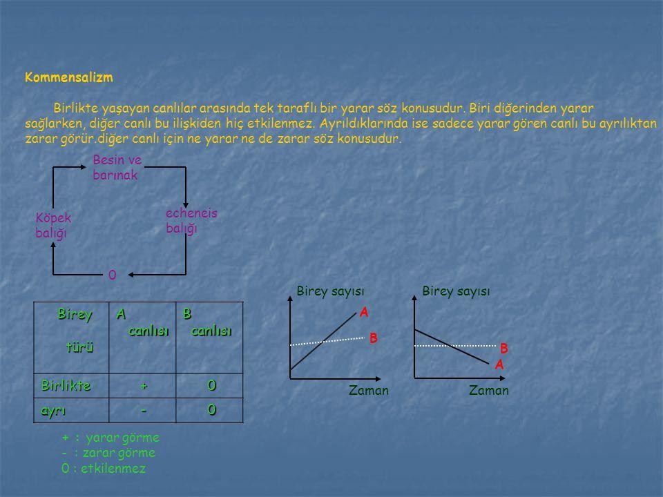 Birey türü A canlısı B Birlikte + ayrı - Kommensalizm