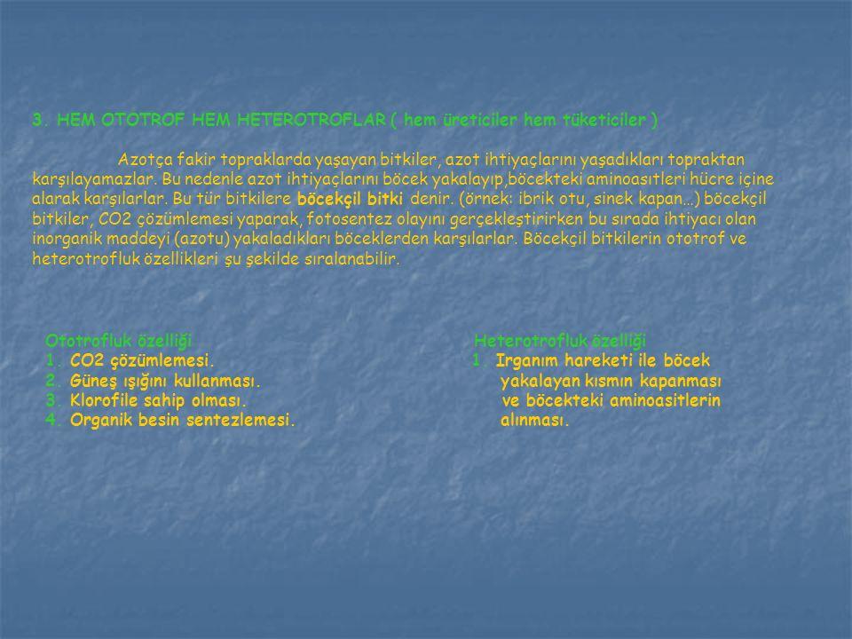 3. HEM OTOTROF HEM HETEROTROFLAR ( hem üreticiler hem tüketiciler )