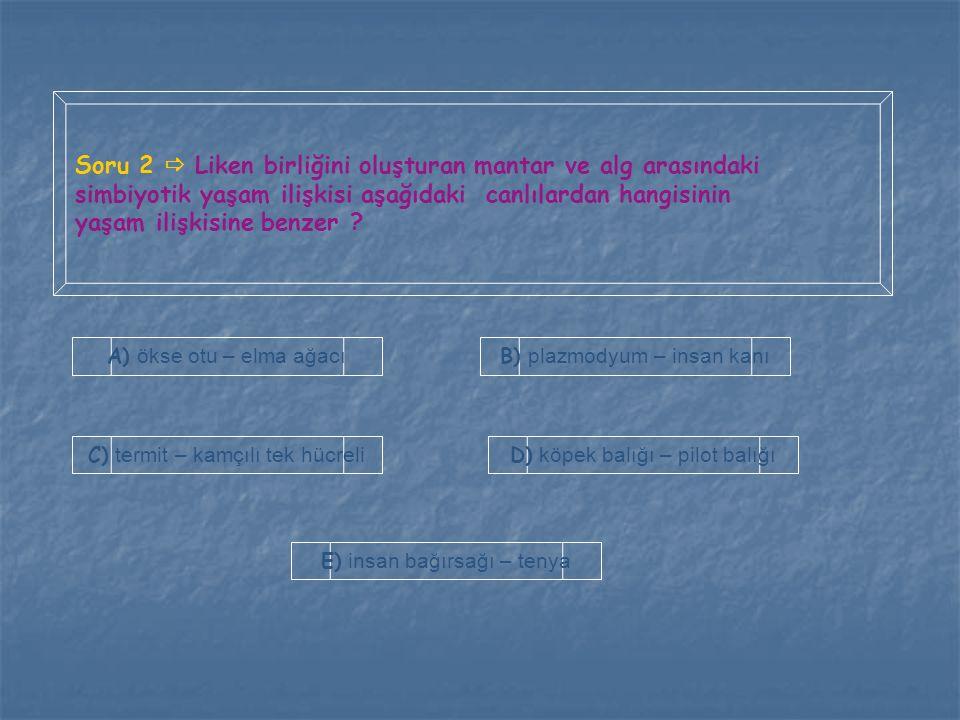 Soru 2  Liken birliğini oluşturan mantar ve alg arasındaki