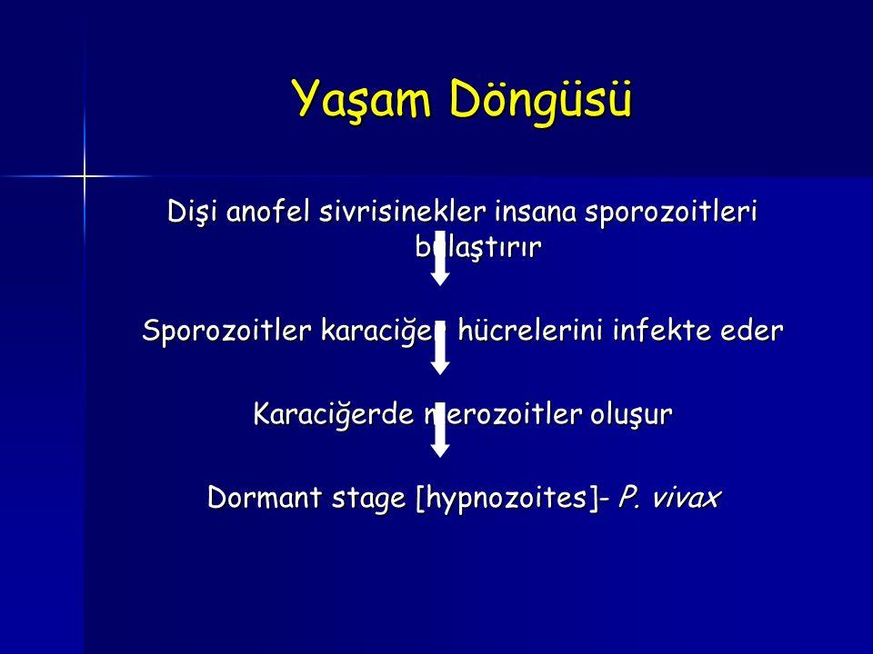 Yaşam Döngüsü Dişi anofel sivrisinekler insana sporozoitleri bulaştırır. Sporozoitler karaciğer hücrelerini infekte eder.