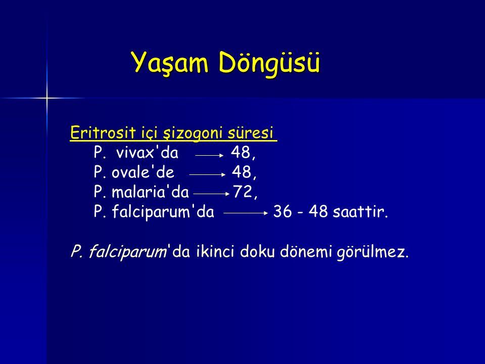 Yaşam Döngüsü Eritrosit içi şizogoni süresi P. vivax da 48,