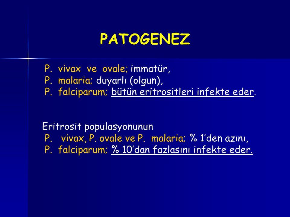 PATOGENEZ P. vivax ve ovale; immatür, P. malaria; duyarlı (olgun),
