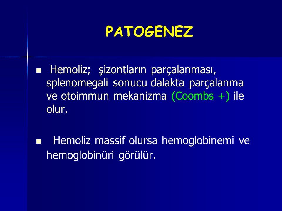 PATOGENEZ Hemoliz; şizontların parçalanması, splenomegali sonucu dalakta parçalanma ve otoimmun mekanizma (Coombs +) ile olur.