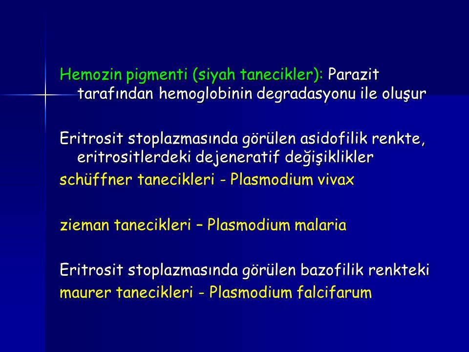 Hemozin pigmenti (siyah tanecikler): Parazit tarafından hemoglobinin degradasyonu ile oluşur
