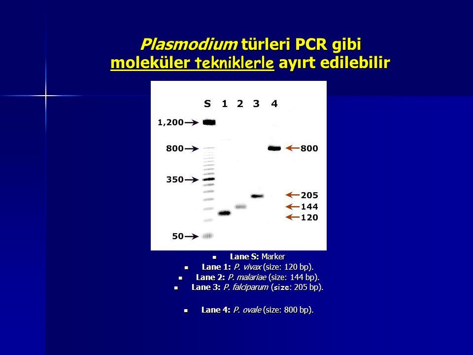 Plasmodium türleri PCR gibi moleküler tekniklerle ayırt edilebilir