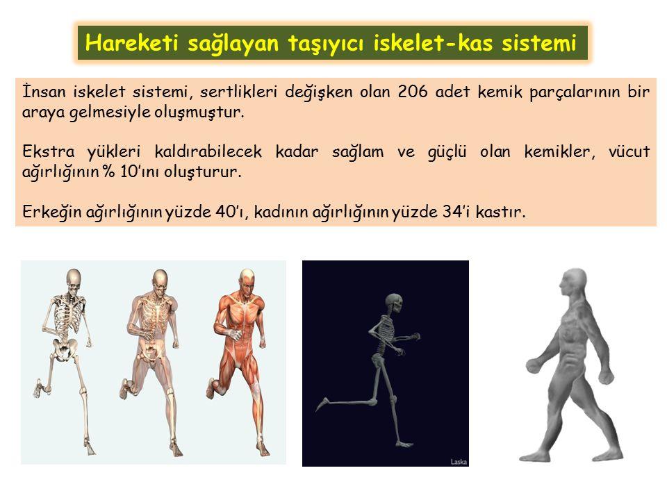 Hareketi sağlayan taşıyıcı iskelet-kas sistemi