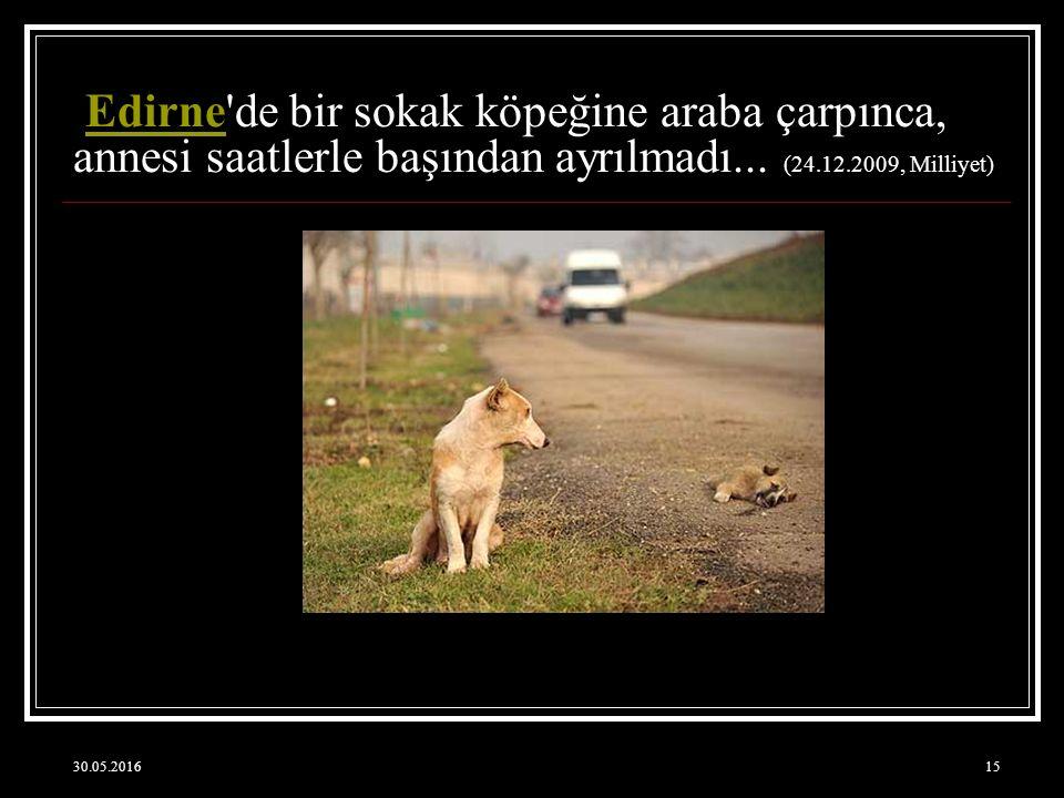 Edirne de bir sokak köpeğine araba çarpınca, annesi saatlerle başından ayrılmadı... (24.12.2009, Milliyet)