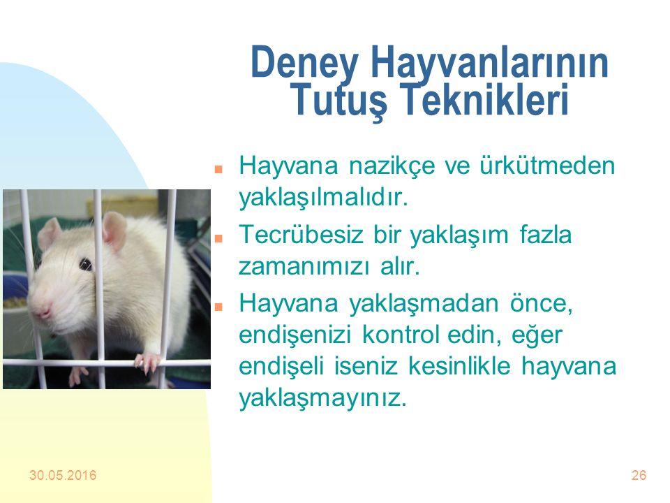 Deney Hayvanlarının Tutuş Teknikleri