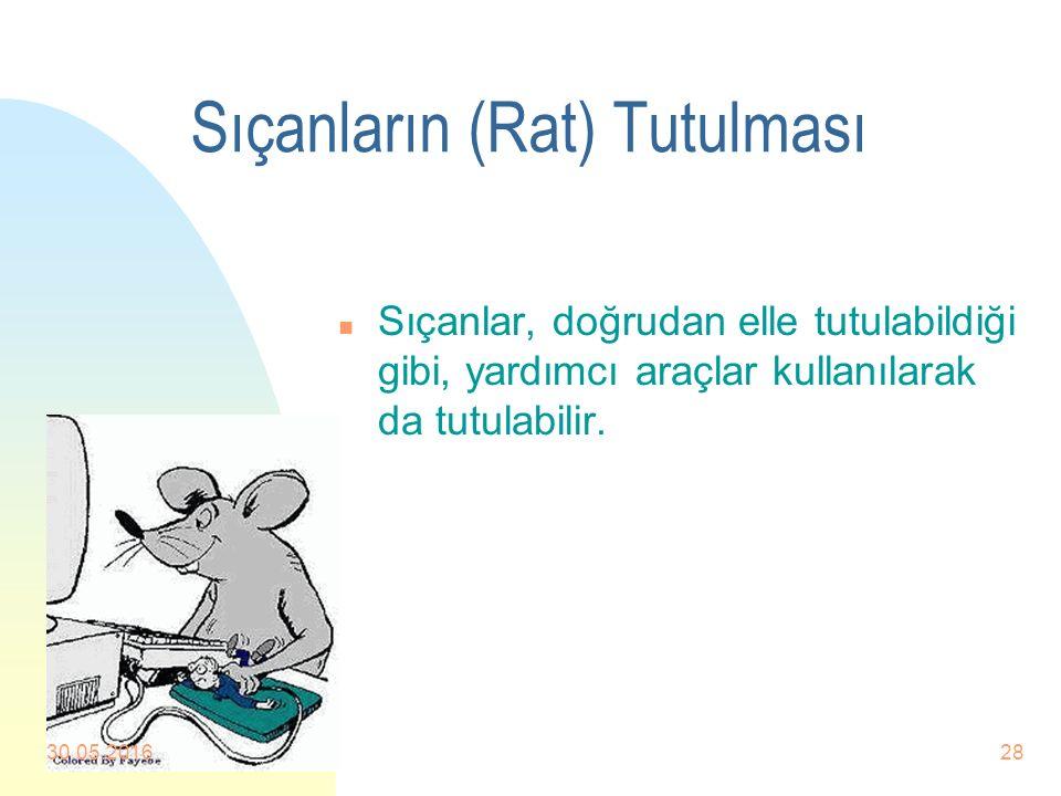 Sıçanların (Rat) Tutulması