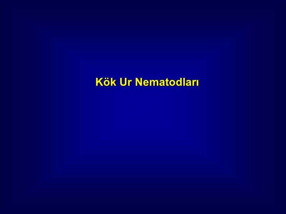 Kök Ur Nematodları
