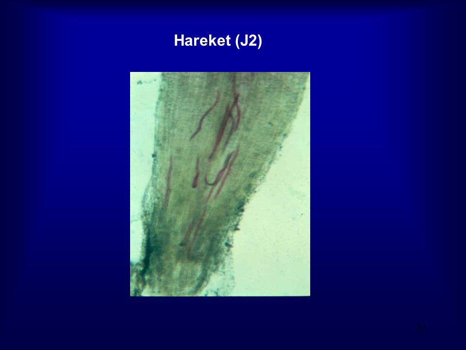 Hareket (J2)