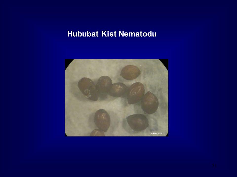Hububat Kist Nematodu