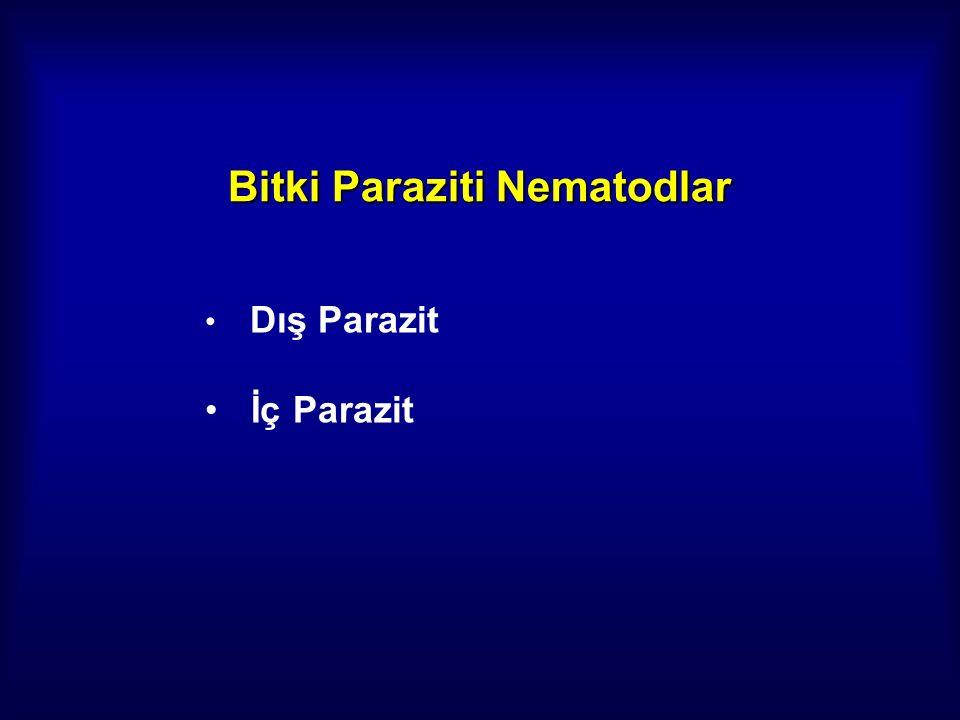Bitki Paraziti Nematodlar