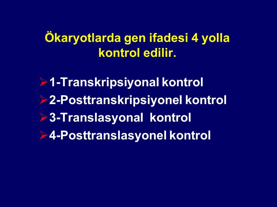 Ökaryotlarda gen ifadesi 4 yolla kontrol edilir.
