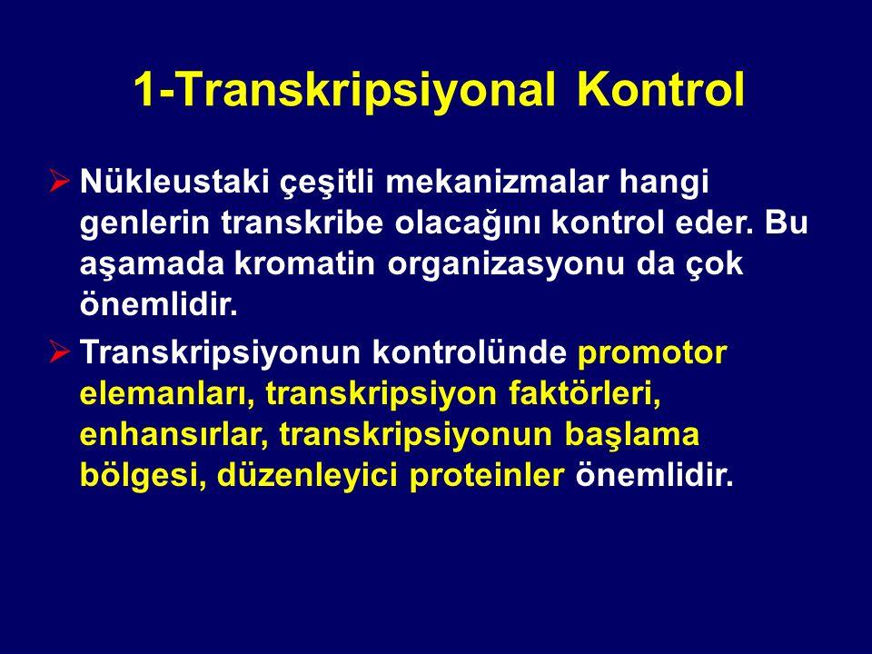 1-Transkripsiyonal Kontrol