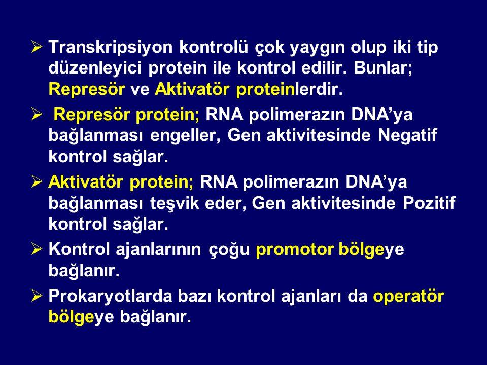Transkripsiyon kontrolü çok yaygın olup iki tip düzenleyici protein ile kontrol edilir. Bunlar; Represör ve Aktivatör proteinlerdir.