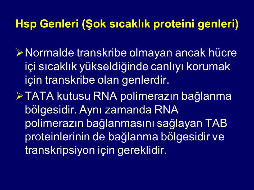 Hsp Genleri (Şok sıcaklık proteini genleri)