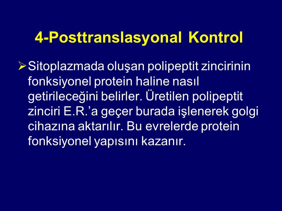 4-Posttranslasyonal Kontrol
