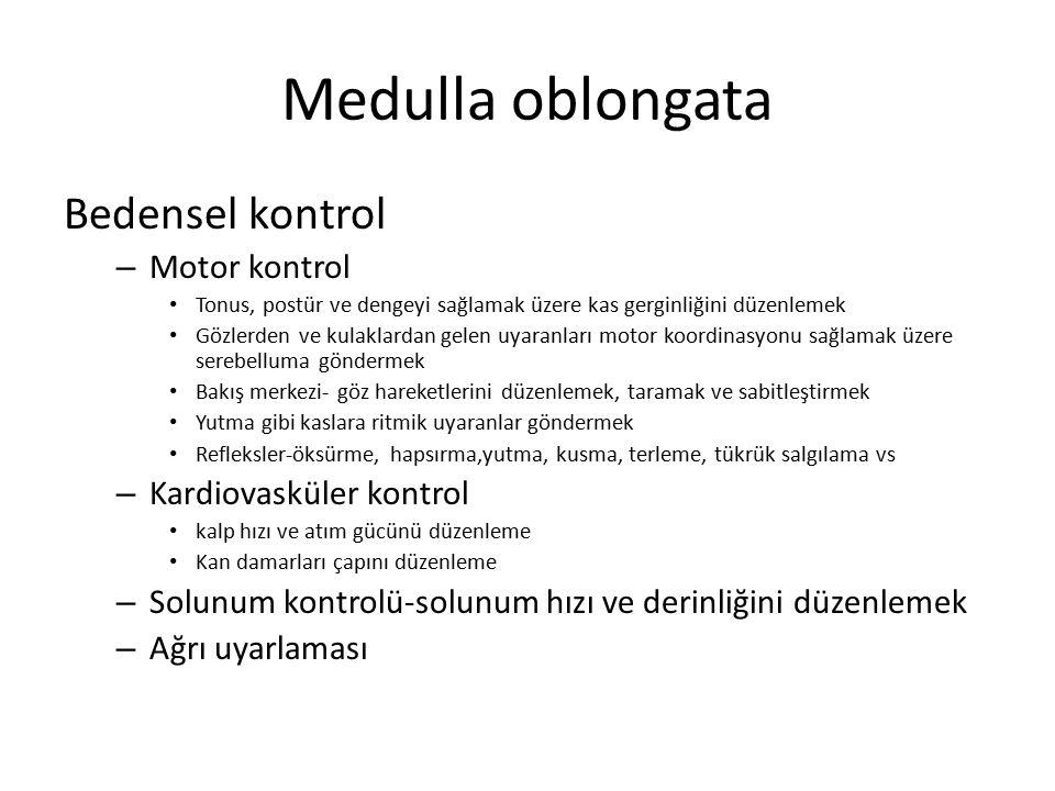 Medulla oblongata Bedensel kontrol Motor kontrol