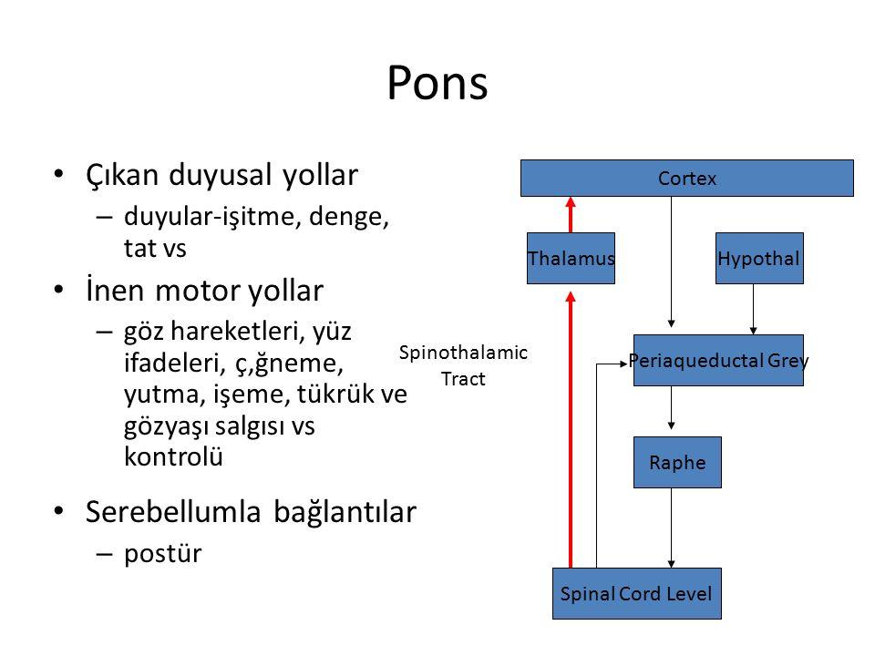 Pons Çıkan duyusal yollar İnen motor yollar Serebellumla bağlantılar
