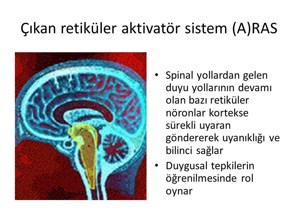Çıkan retiküler aktivatör sistem (A)RAS