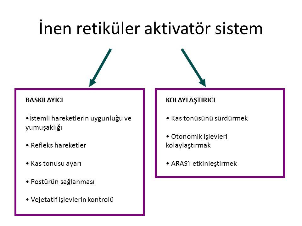 İnen retiküler aktivatör sistem