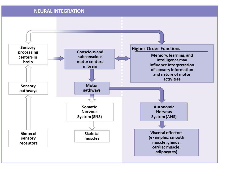 NEURAL INTEGRATION Higher-Order Functions
