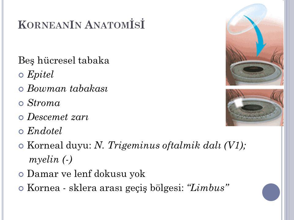 KorneanIn Anatomİsİ Beş hücresel tabaka Epitel Bowman tabakası Stroma