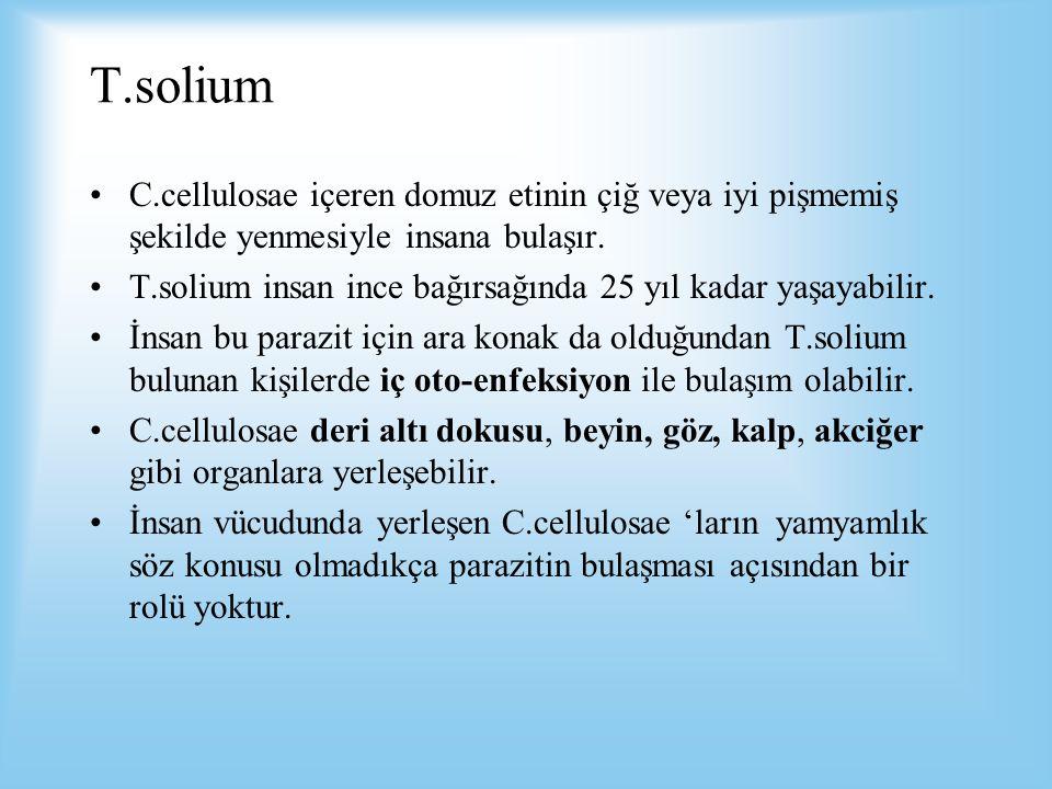 T.solium C.cellulosae içeren domuz etinin çiğ veya iyi pişmemiş şekilde yenmesiyle insana bulaşır.