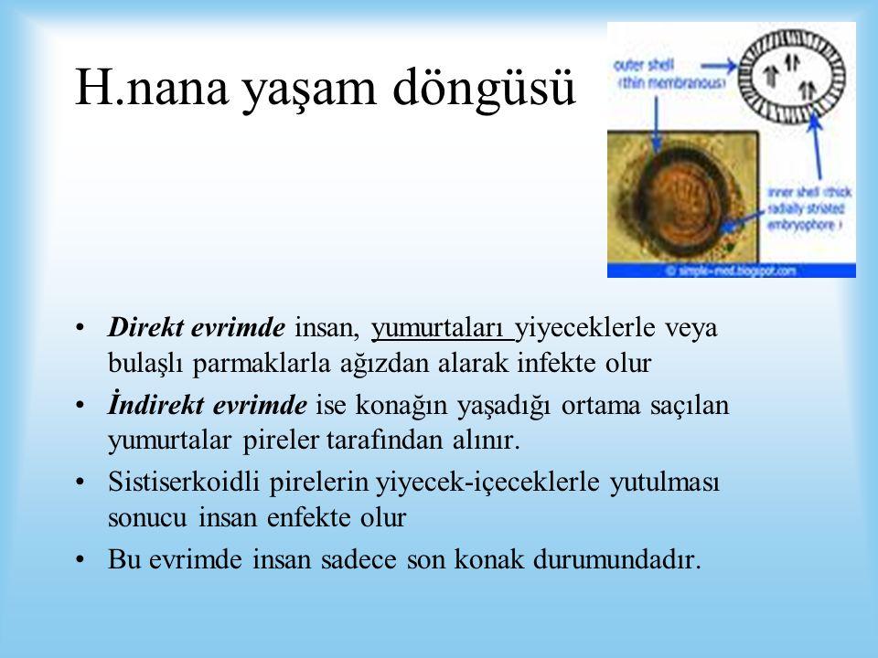 H.nana yaşam döngüsü Direkt evrimde insan, yumurtaları yiyeceklerle veya bulaşlı parmaklarla ağızdan alarak infekte olur.
