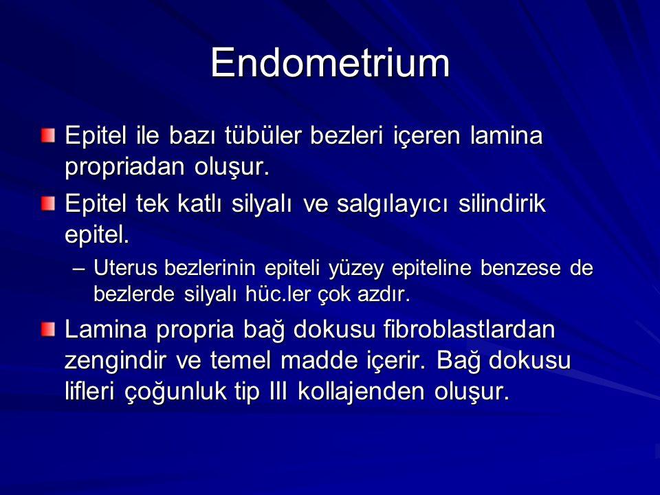 Endometrium Epitel ile bazı tübüler bezleri içeren lamina propriadan oluşur. Epitel tek katlı silyalı ve salgılayıcı silindirik epitel.
