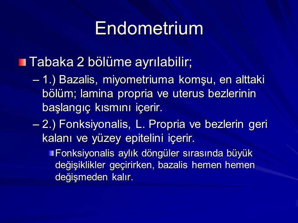 Endometrium Tabaka 2 bölüme ayrılabilir;
