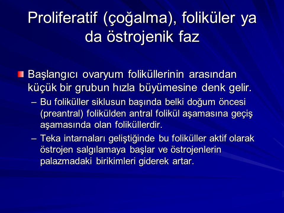Proliferatif (çoğalma), foliküler ya da östrojenik faz