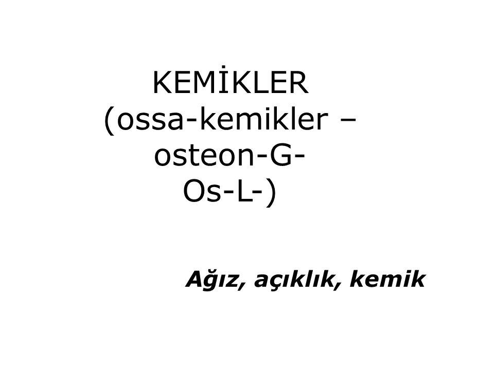 (ossa-kemikler –osteon-G-