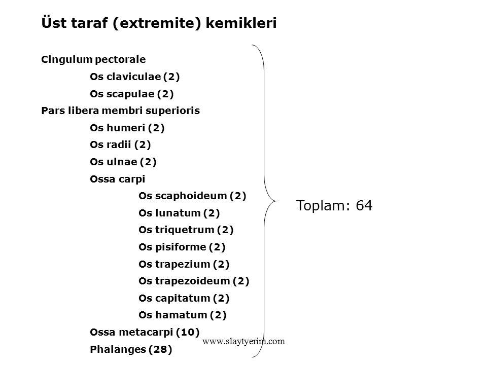 Üst taraf (extremite) kemikleri