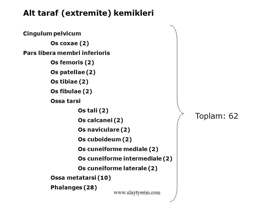 Alt taraf (extremite) kemikleri