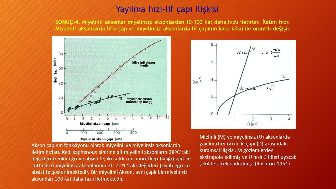Yayılma hızı-lif çapı ilişkisi